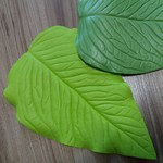 Молды листья