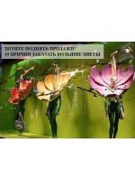 Заказывай первоклассное оформление цветами гигантами и получай бонусы! Спецпредложения для организаторов