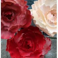 Мы предлагаем изолон для цветов